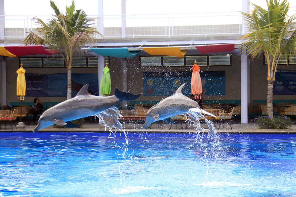 dolphin therapy center