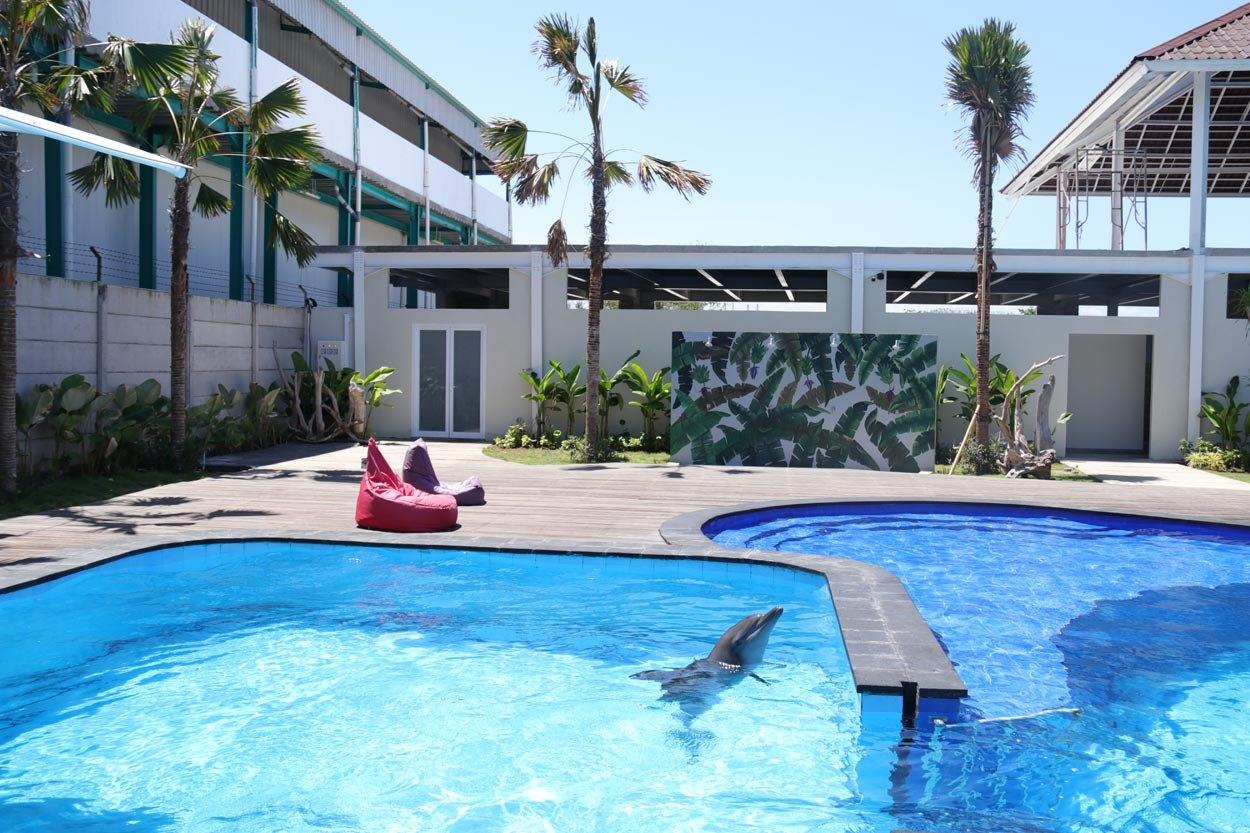 bali-dolphin-therapy-pool-2