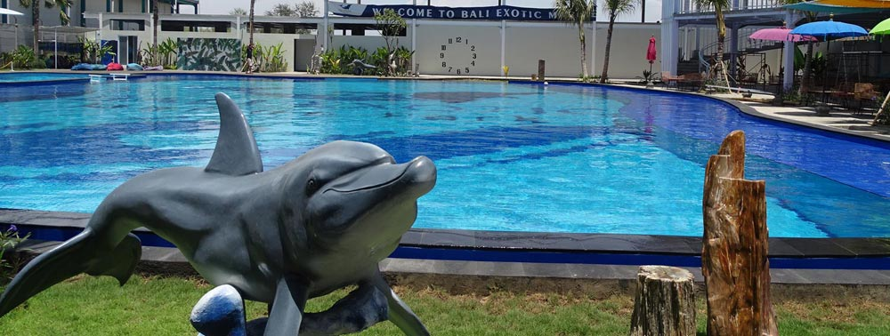 bali dolphin therapy pool