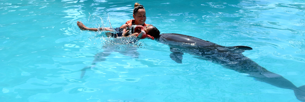 how does dolphin therapy work