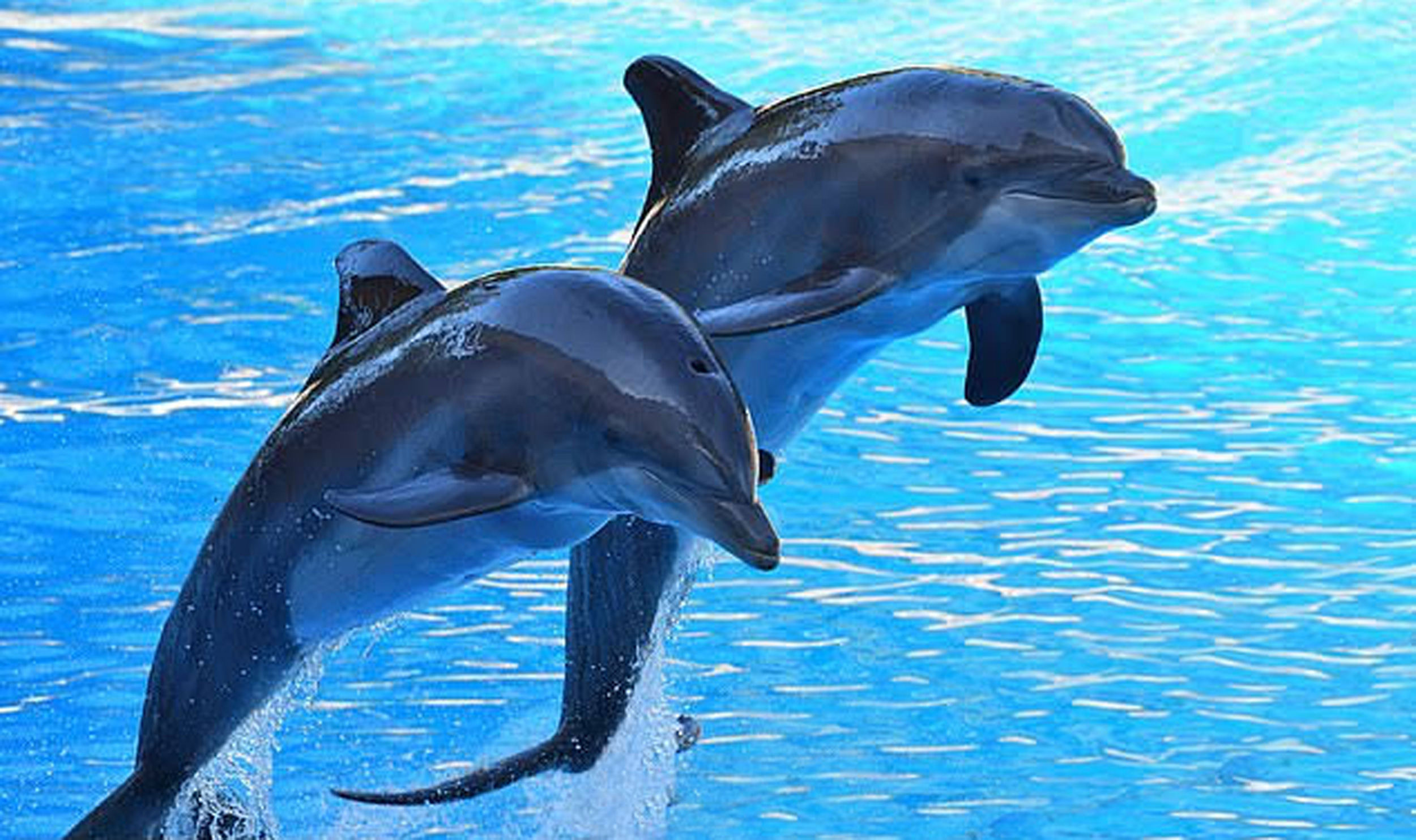 Dolphin Assisted Therapy Bali (DAT)