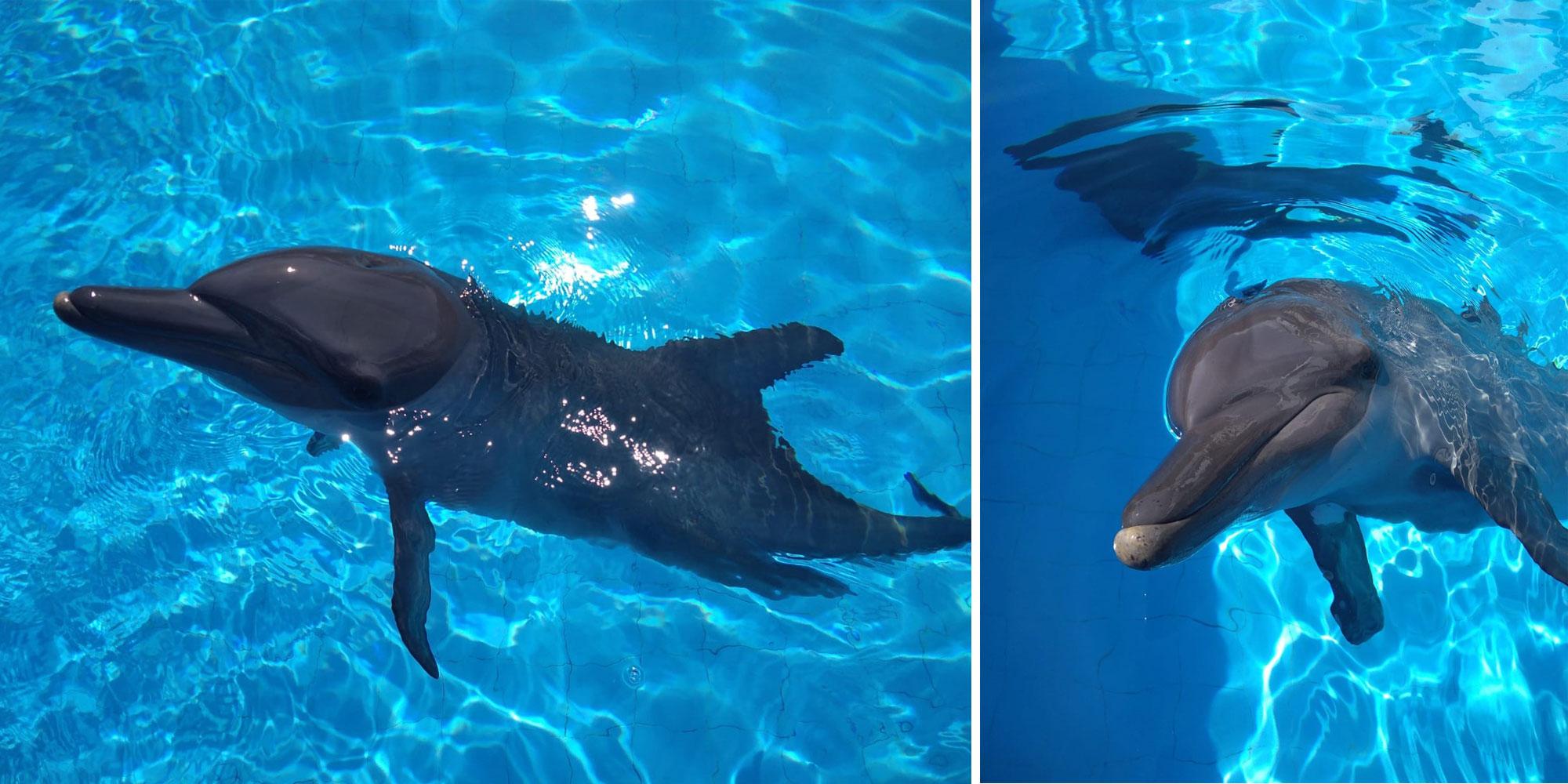 bali therapy dolphin simba