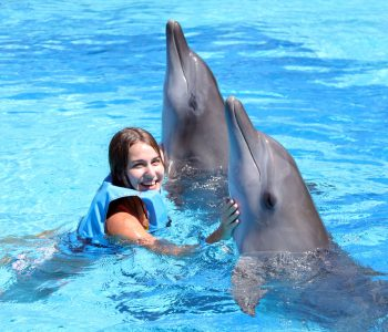 bali dolphin therapy news